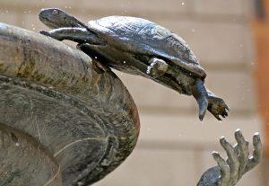 turtle-370321_1920